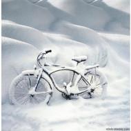 velosiped-zimoy